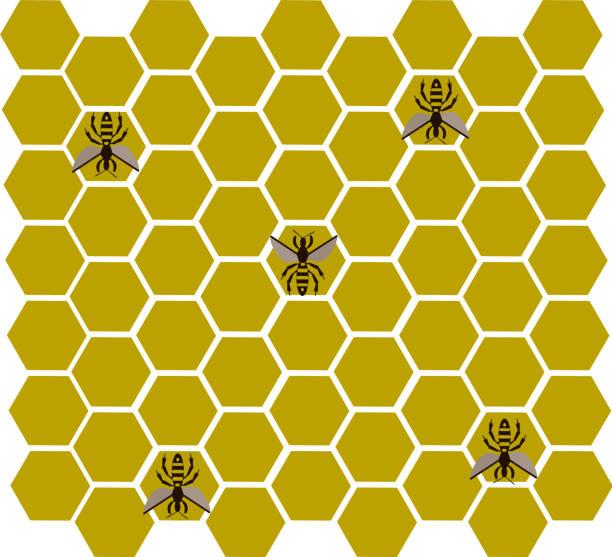 bee Healthy food. Bee honey hive honeycomb icon pacific dogwood stock illustrations