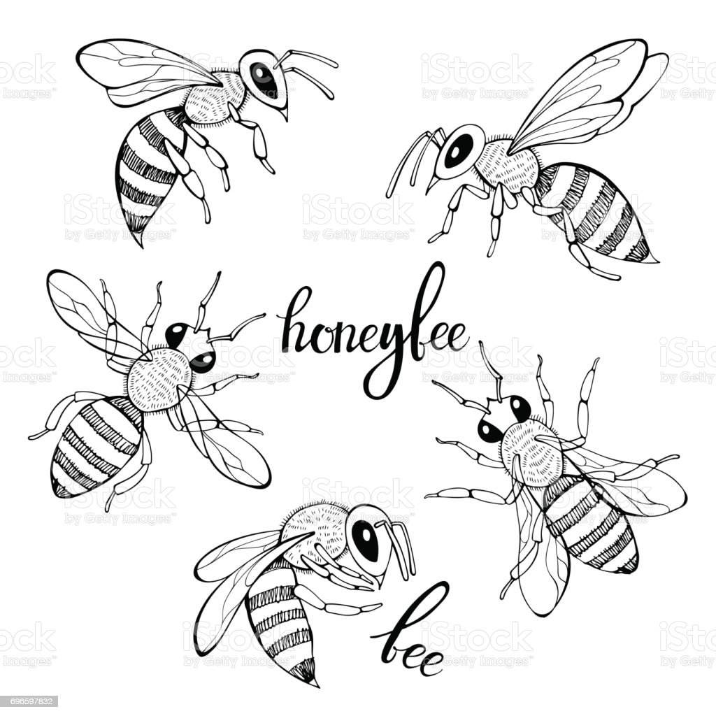 Bee. Vector set. Isolated monochrome elements for design on a white background. vector art illustration