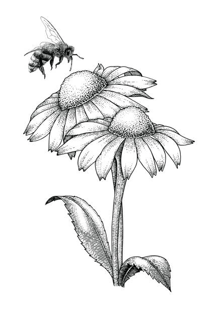 Bee with flowers hand drawing engraving style isolate on white background vector art illustration