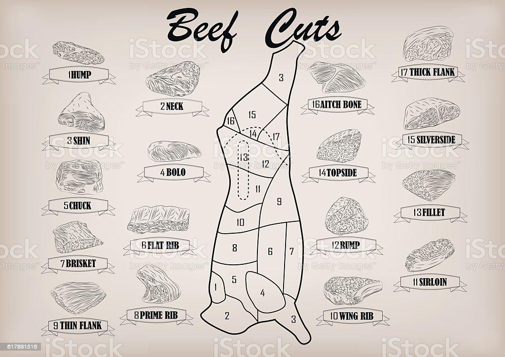 Beef cow bull carcass cuts parts infographics scheme vector illustration vector art illustration