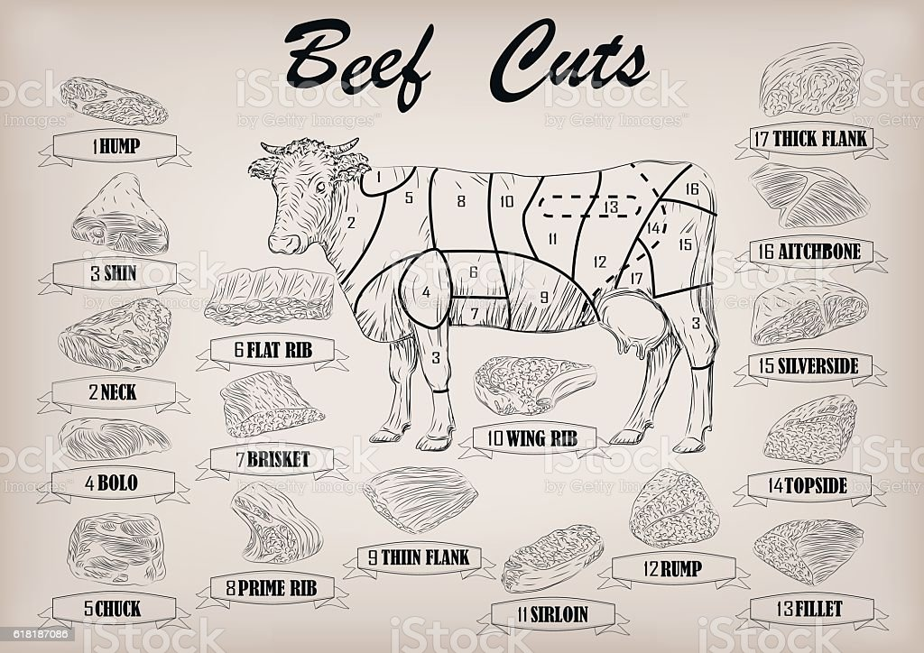 Beef cow bull whole carcass cuts infographics scheme vector illustration vector art illustration