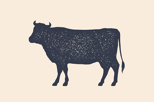 Beef, cow. Poster for Butchery meat shop