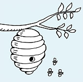 Beehive and tree branch