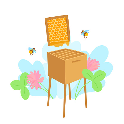 A beehive box with bees. A honeycomb frame with honey. Honey farm, a bee hive. Apiary for honeybees. Clover flowers on the background.