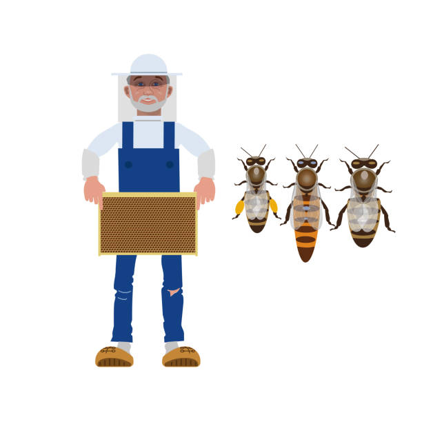 Beekeeper and bees Beekeeper holding a frame with honey. Worker bee, queen bee and drone. Vector illustration isolated on white background queen bee stock illustrations