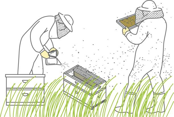 Beekeepers Beekeepers, a man and a woman in protective suits, fumigate bees and collect honey. beekeeper stock illustrations