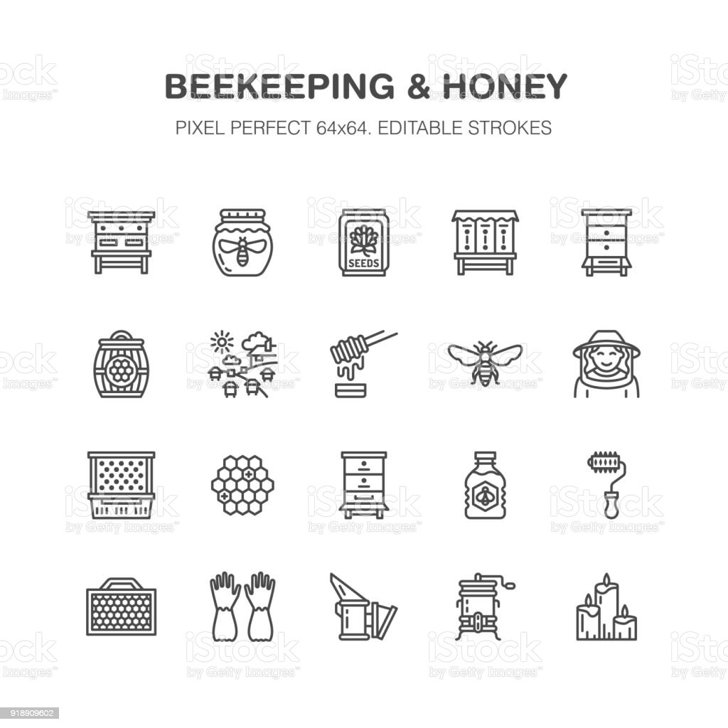 Beekeeping, apiculture flat line icons. Beekeeper equipment, honey processing, honeybee, beehives types natural products. Bee garden, apiary thin linear signs, organic farm shop. Pixel perfect 64x64 vector art illustration