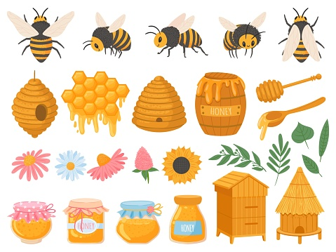 Beekeeping. Apiculture products various honey in glass jars. Honeycomb, beeswax, beehive, flowers and bees organic food vector set
