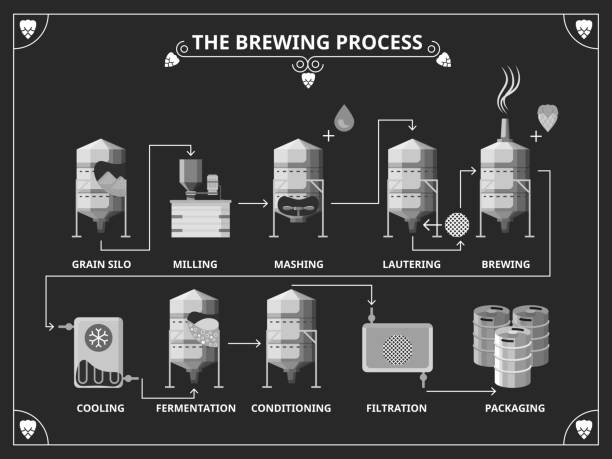 Beer brewing process. Vector beer production infographic set vector art illustration