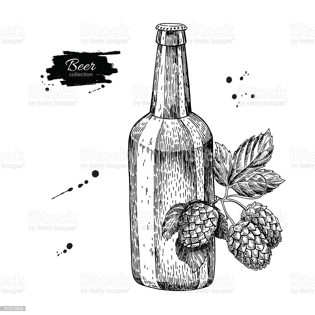 Beer Glass Bottle With Hop Sketch Vector Illustration Hand ...