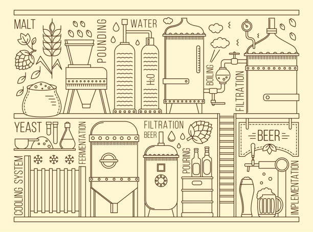 Beer production stage vector art illustration
