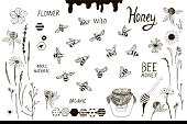 Bees and flowers set