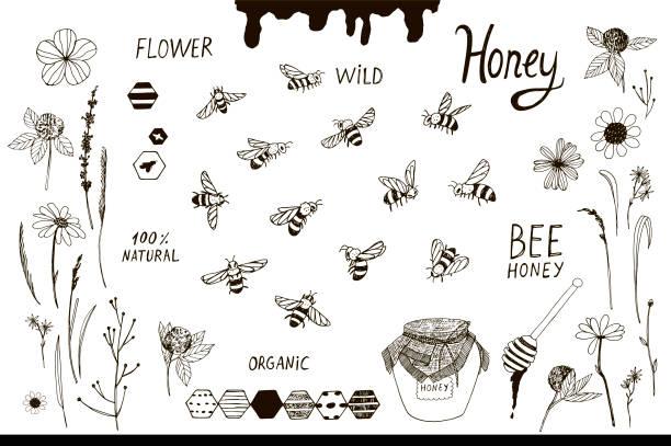 ilustrações de stock, clip art, desenhos animados e ícones de bees and flowers set - abelha