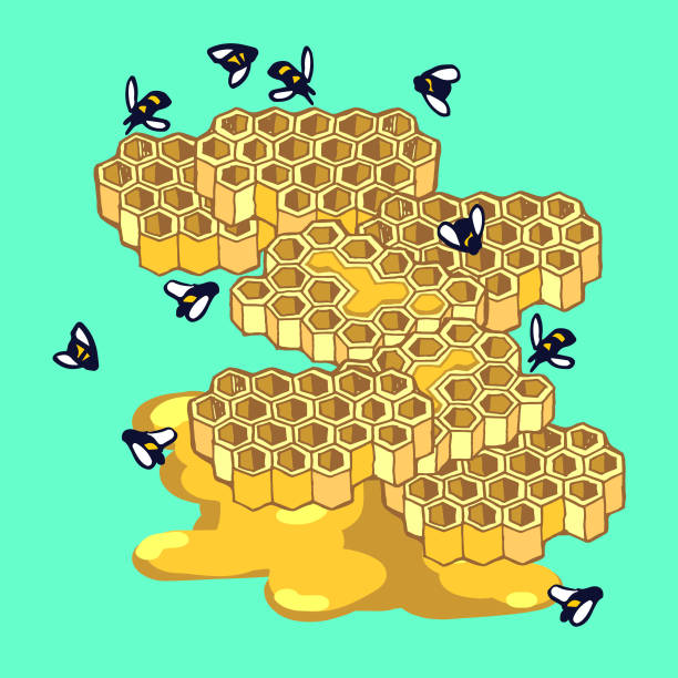 Bees and Honeycomb vector art illustration