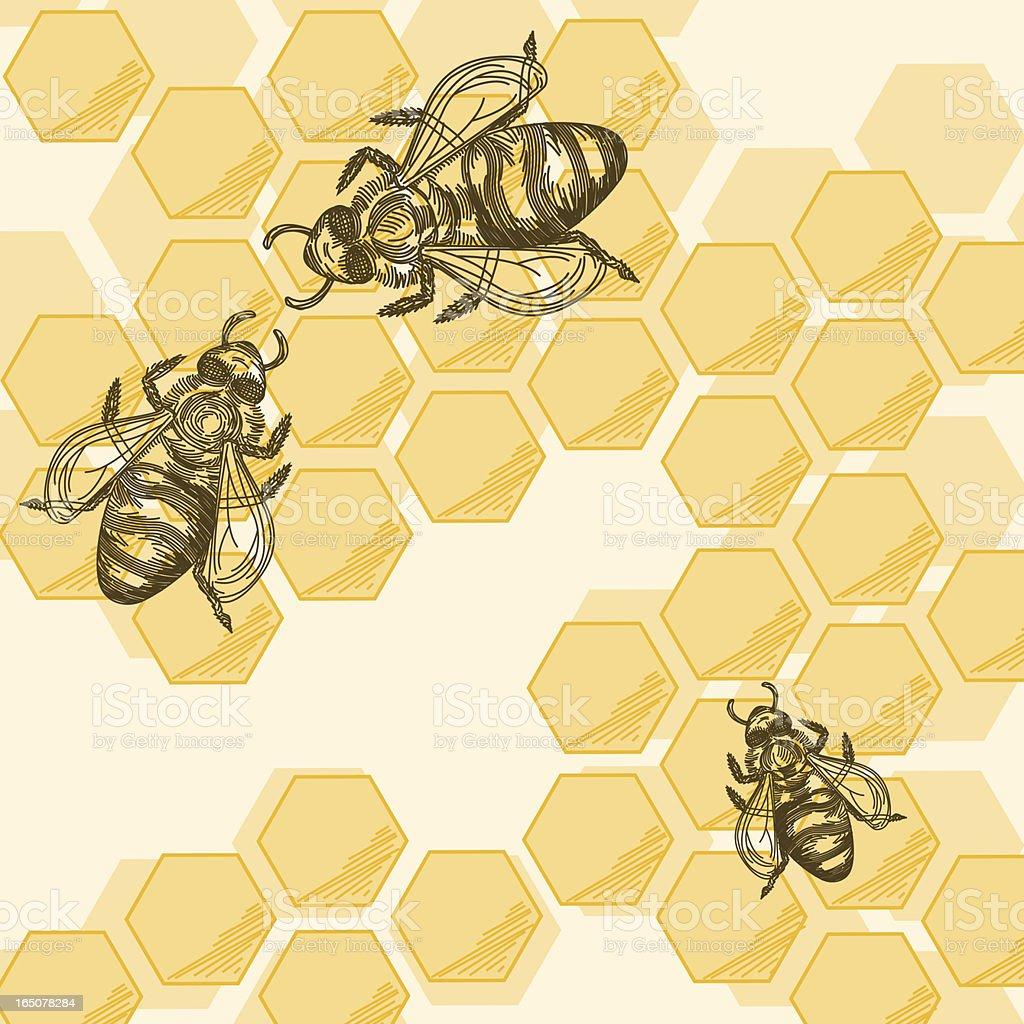 Bees & Honeycomb vector art illustration