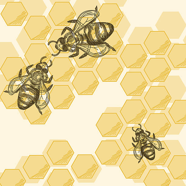 Bees & Honeycomb vector art illustration