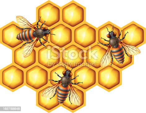 Bees with Honeycomb