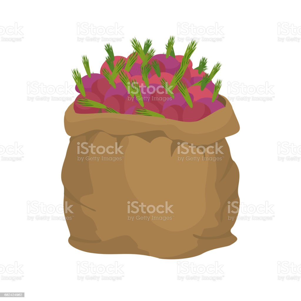 Beet Burlap bag. sack of vegetables. big crop on farm. sackful beetroot royalty-free beet burlap bag sack of vegetables big crop on farm sackful beetroot stock vector art & more images of agriculture