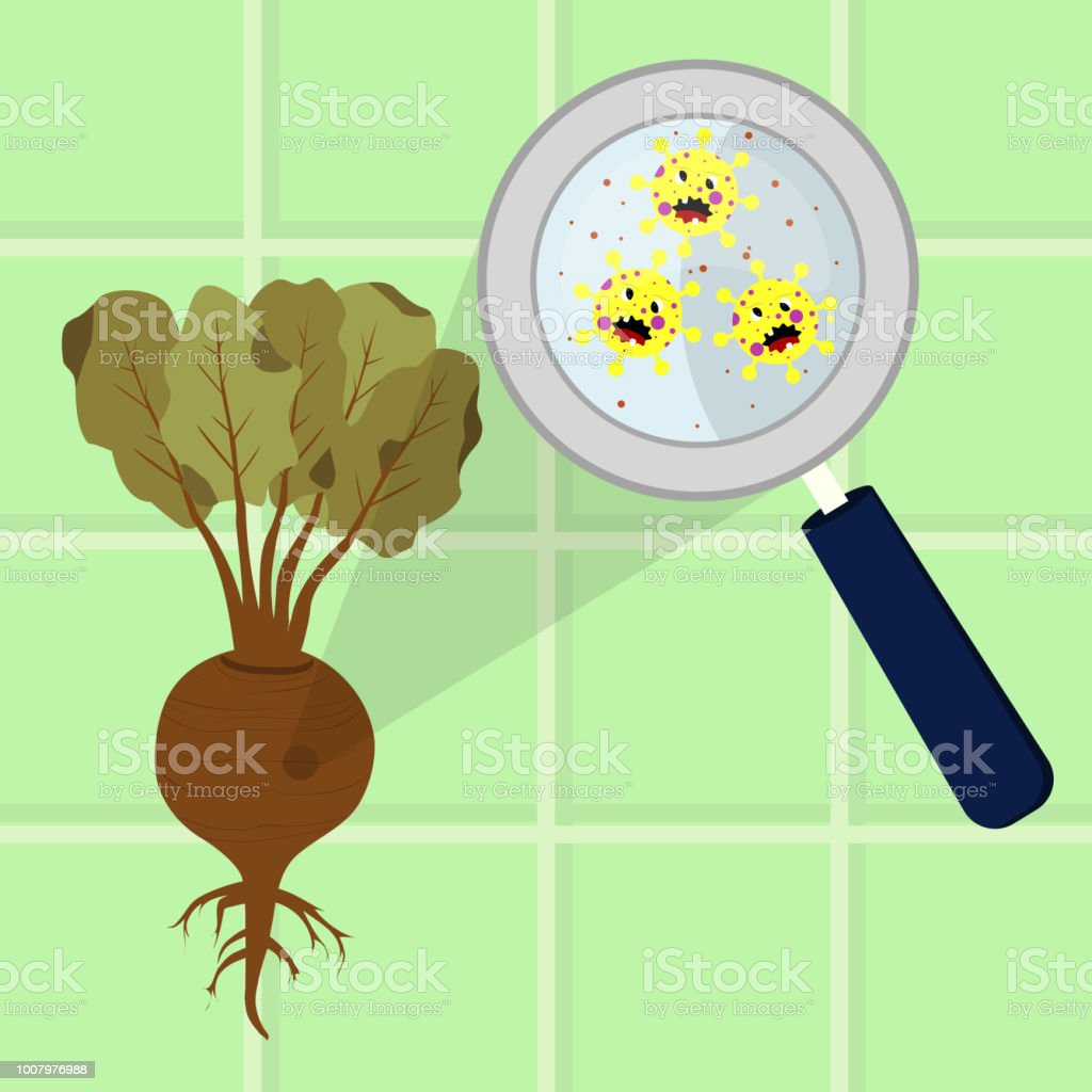 Beet contaminated with microbes vector art illustration