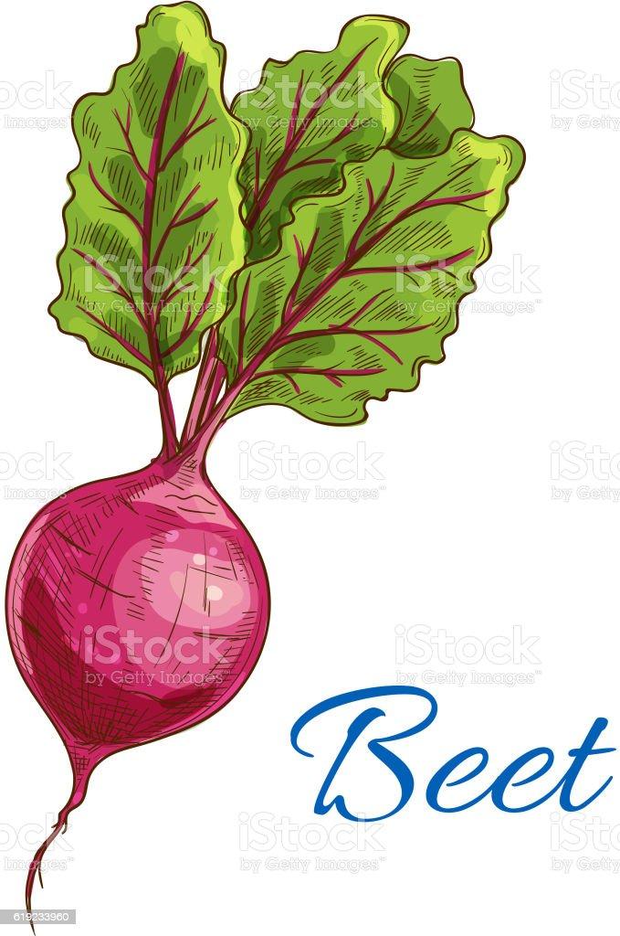 Beet icon. Fresh farm vegetable tuber with leaves vector art illustration