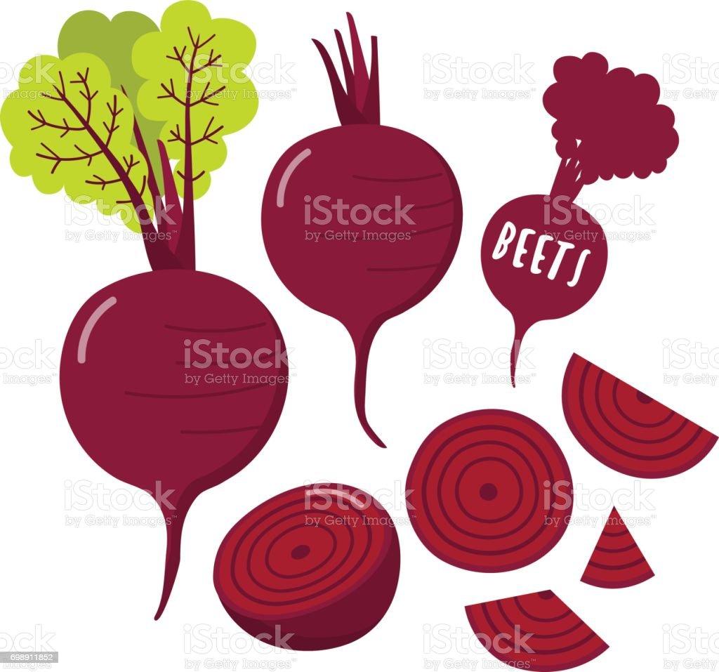 beet root vector art illustration