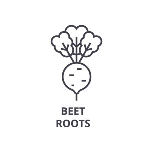 beet, roots line icon, outline sign, linear symbol, vector, flat illustration vector art illustration