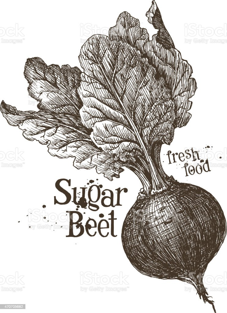 beet vector logo design template. fresh vegetables, food or harvest vector art illustration