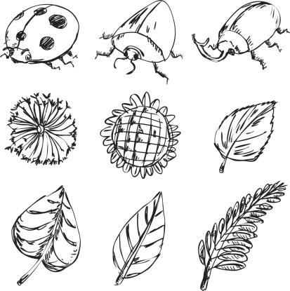 Beetle and plants