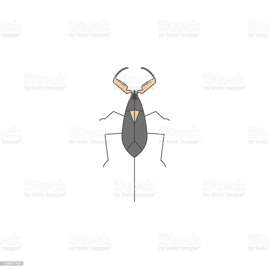 Beetle Colored Outline Icon One Of The Collection Icons For