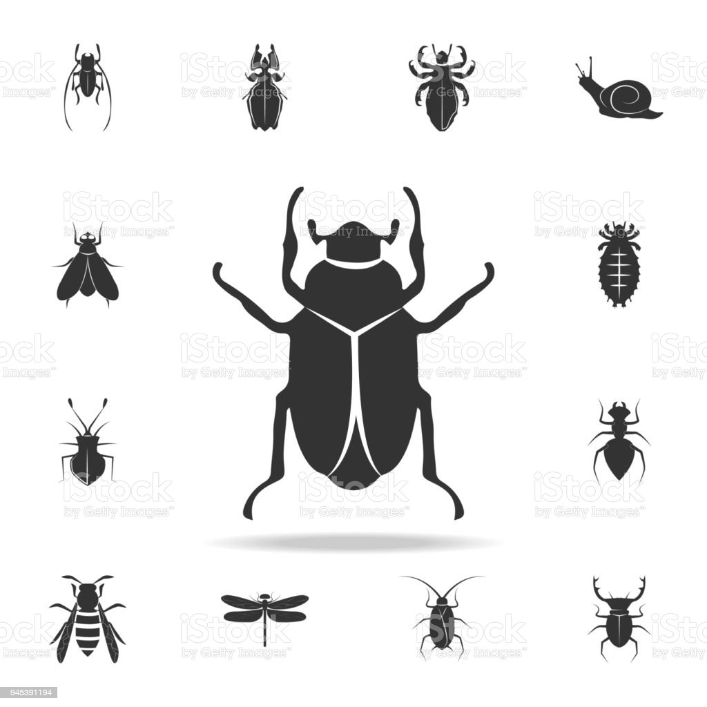 beetle. Detailed set of insects items icons. Premium quality graphic design. One of the collection icons for websites, web design, mobile app vector art illustration