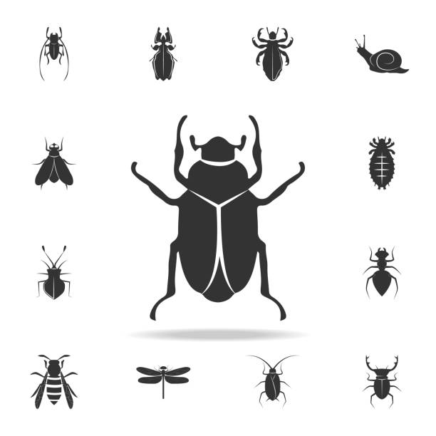 beetle. Detailed set of insects items icons. Premium quality graphic design. One of the collection icons for websites, web design, mobile app beetle. Detailed set of insects items icons. Premium quality graphic design. One of the collection icons for websites, web design, mobile app on white background beetle stock illustrations