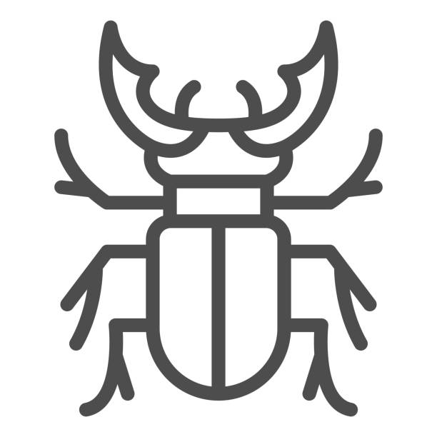 Beetle stag line icon, Bugs concept, Deer beetle sign on white background, Stag-beetle icon in outline style for mobile concept and web design. Vector graphics. Beetle stag line icon, Bugs concept, Deer beetle sign on white background, Stag-beetle icon in outline style for mobile concept and web design. Vector graphics arthropod stock illustrations
