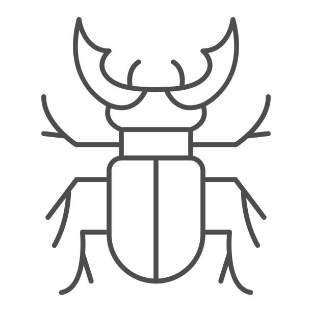 Beetle stag thin line icon, Bugs concept, Deer beetle sign on white background, Stag-beetle icon in outline style for mobile concept and web design. Vector graphics. Beetle stag thin line icon, Bugs concept, Deer beetle sign on white background, Stag-beetle icon in outline style for mobile concept and web design. Vector graphics arthropod stock illustrations