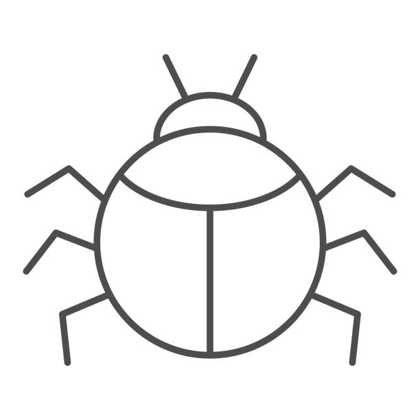 Beetle thin line icon, Insects concept, bug sign on white background, round shaped beetle silhouette icon in outline style for mobile concept and web design. Vector graphics. Beetle thin line icon, Insects concept, bug sign on white background, round shaped beetle silhouette icon in outline style for mobile concept and web design. Vector graphics arachnid stock illustrations
