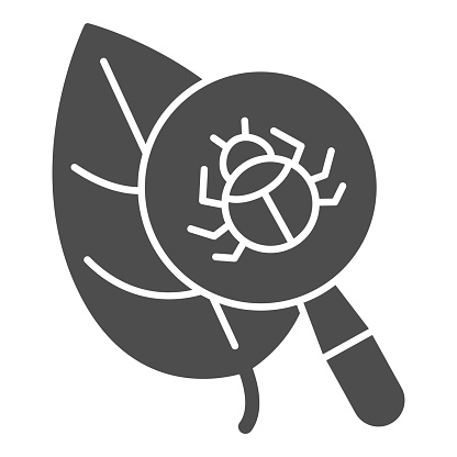 Beetle under magnifying glass on leaf solid icon, Allergy concept, Insect under magnifier sign on white background, Search parasites under magnifier icon in glyph style. Vector graphics.