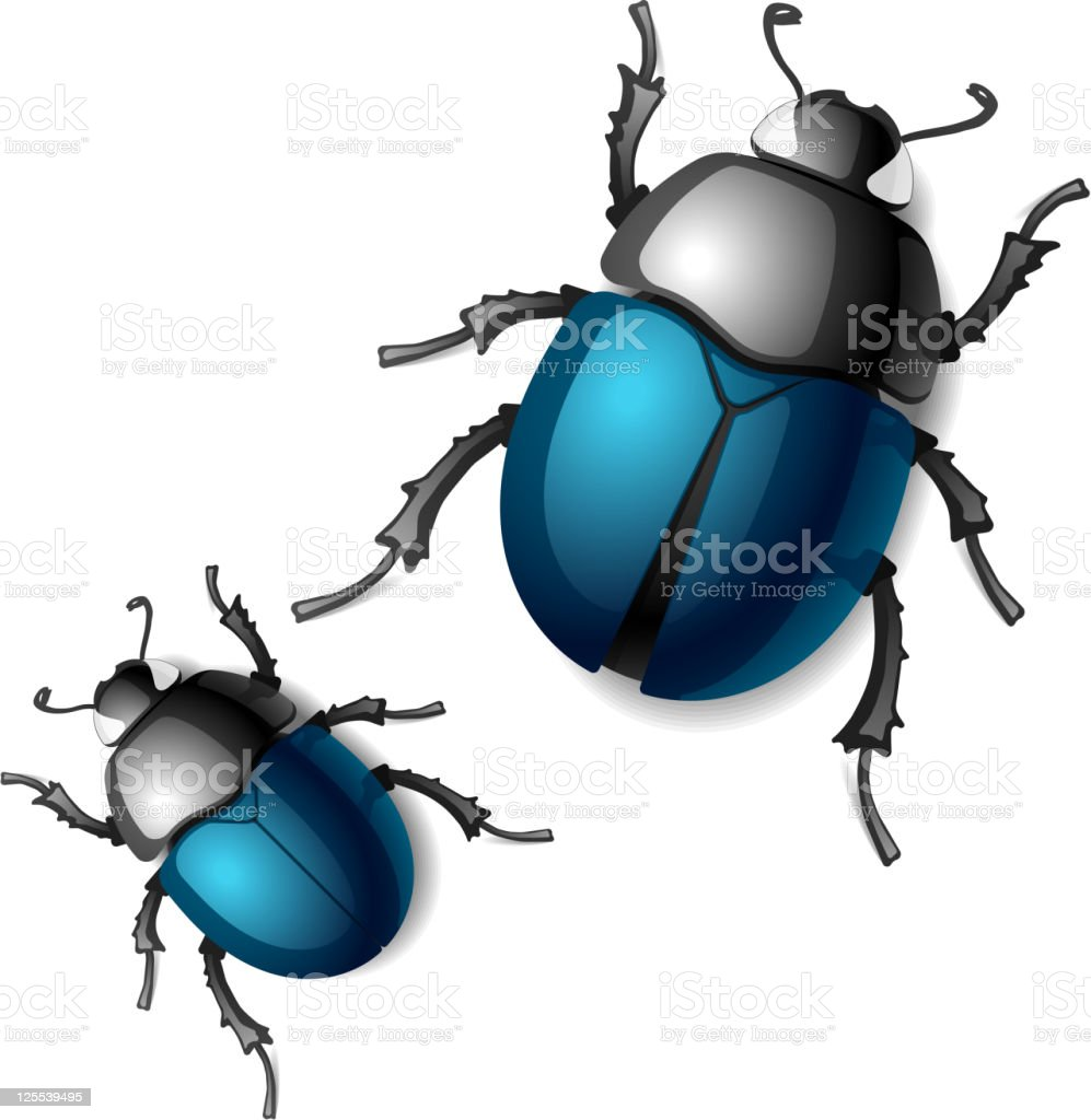 Beetle vector art illustration