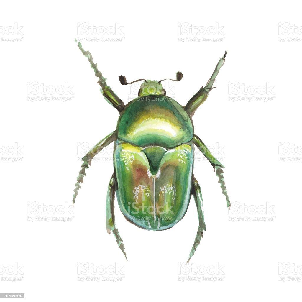Beetle. Watercolor vector vector art illustration