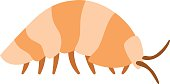 Beetle wood louse exoskeleton armadillo armor insect flat vector