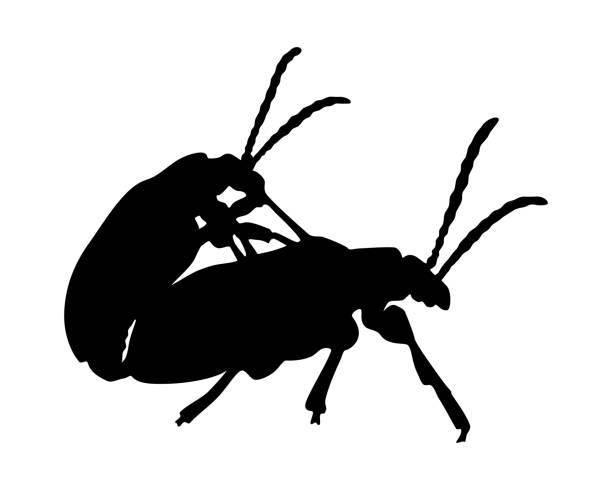 Coléoptères de copulation - Illustration vectorielle