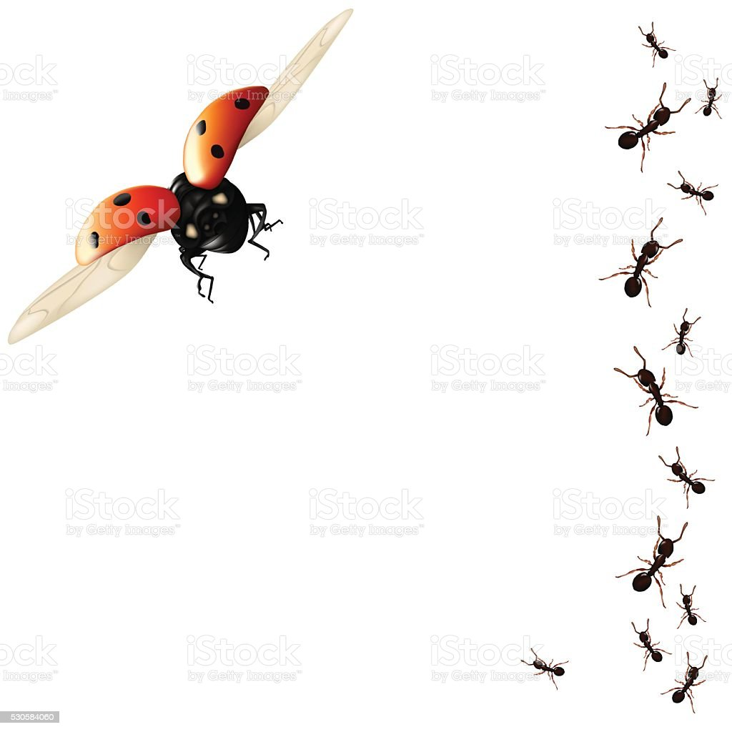 beetles vector art illustration
