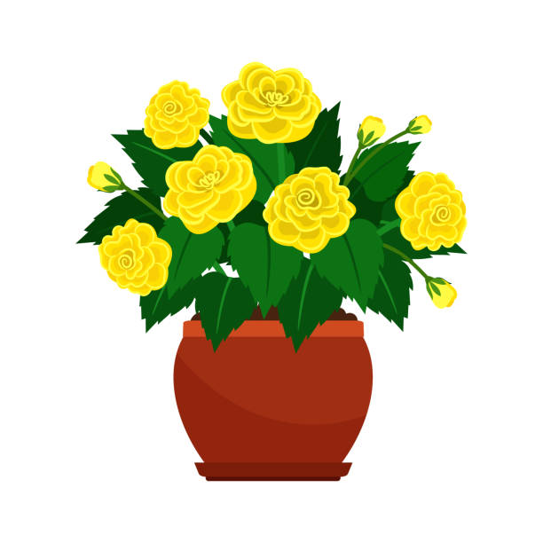 Royalty free clip art of yellow flower pots clip art vector images clip art of yellow flower pots clip art vector images illustrations mightylinksfo