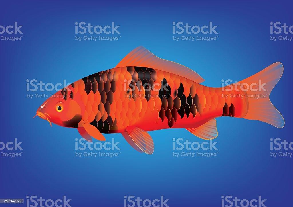 Bekko Koi carp ilustração de bekko koi carp e mais banco de imagens de animal de estimação royalty-free