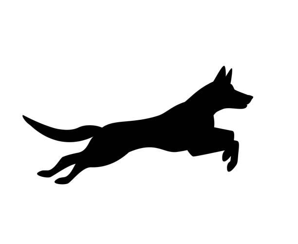 ilustraciones, imágenes clip art, dibujos animados e iconos de stock de belga malinois perro saltar funcionamiento gráfico de silueta - training