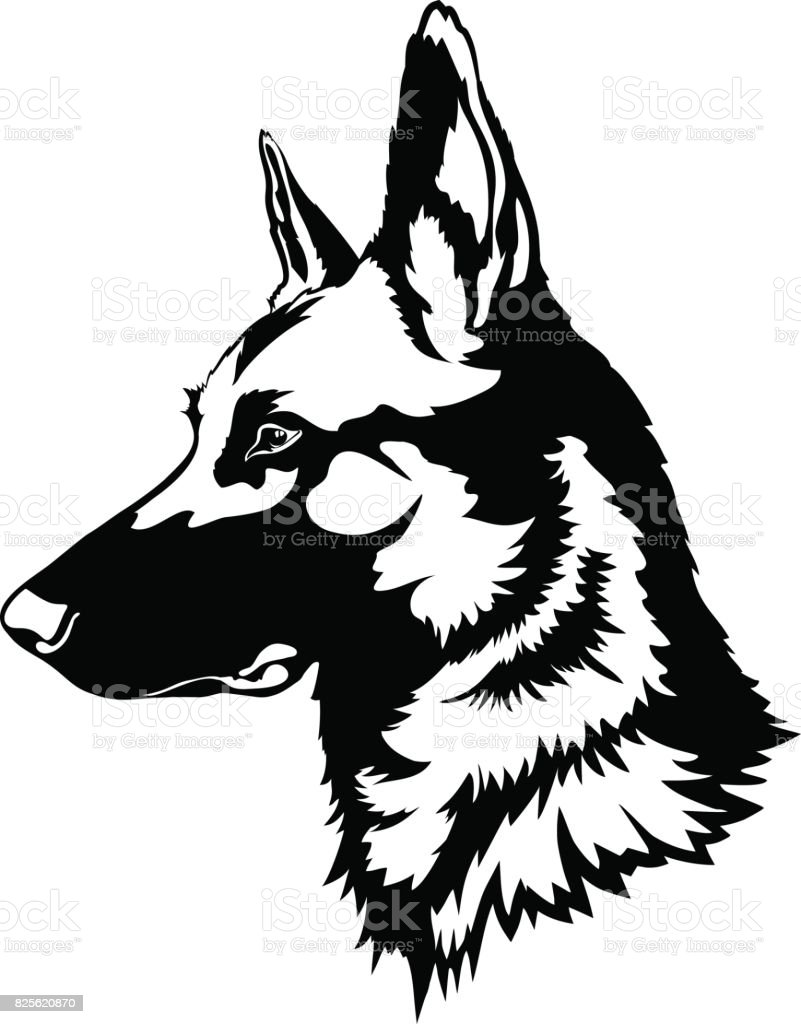 royalty free german shepherd clip art vector images illustrations rh istockphoto com german shepherd clipart free german shepherd clip art images