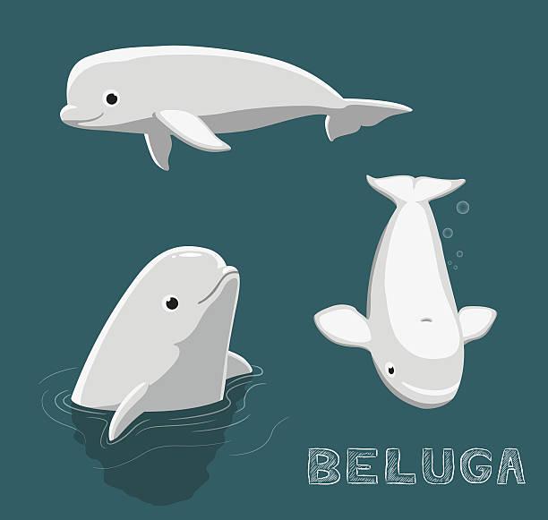 Beluga Cartoon Vector Illustration Dolphin Cartoon EPS10 File Format. beluga whale stock illustrations
