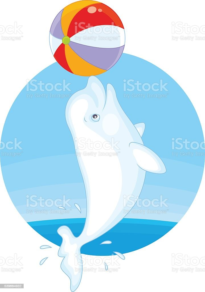 royalty free white whale clip art vector images illustrations rh istockphoto com beluga whale black and white clipart