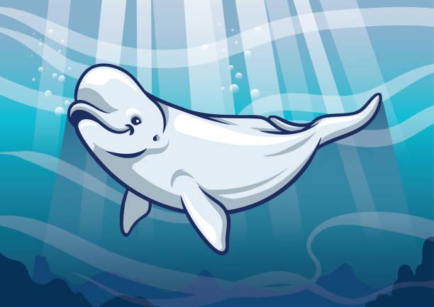 Beluga Whale in the ocean vector of Beluga Whale in the ocean beluga whale stock illustrations