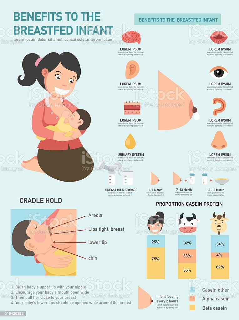 Benefits to the breastfed infant infographics.vector vector art illustration