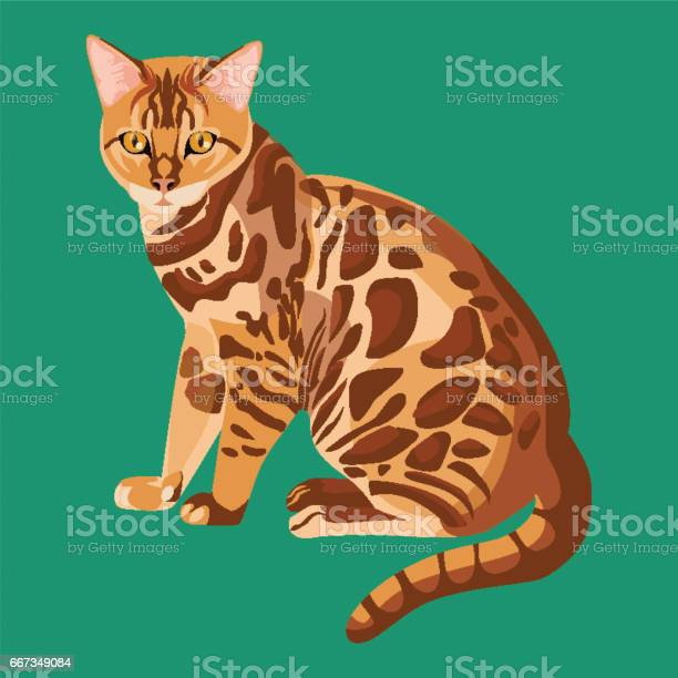 Bengal cat isolated on white selective breeding of domestic cats vector id667349084?b=1&k=6&m=667349084&s=612x612&h=66zpr7iacjikutyolfjnwjhcc52pz439 jbclkw0whi=
