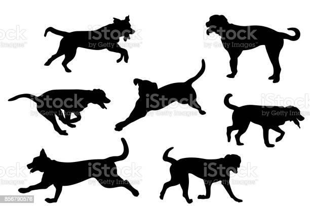Bermese mountain dog vector id856790576?b=1&k=6&m=856790576&s=612x612&h=28kxkdrl25aifzny0mmcium1 lpkgs1n747sudiiobo=